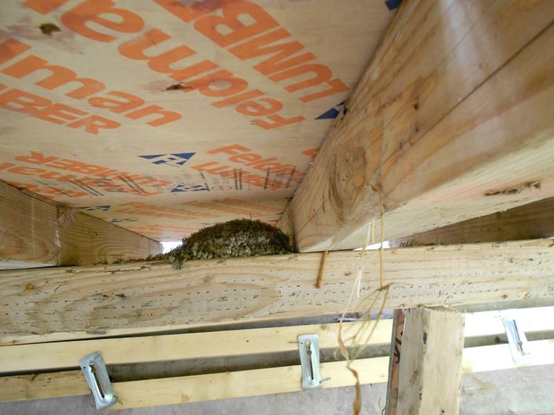 Bird's nest underneath the platform.