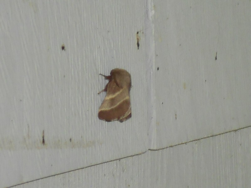 Moth from the Fellowship.If I was trapped on top of Isengard I would talk to a moth too!