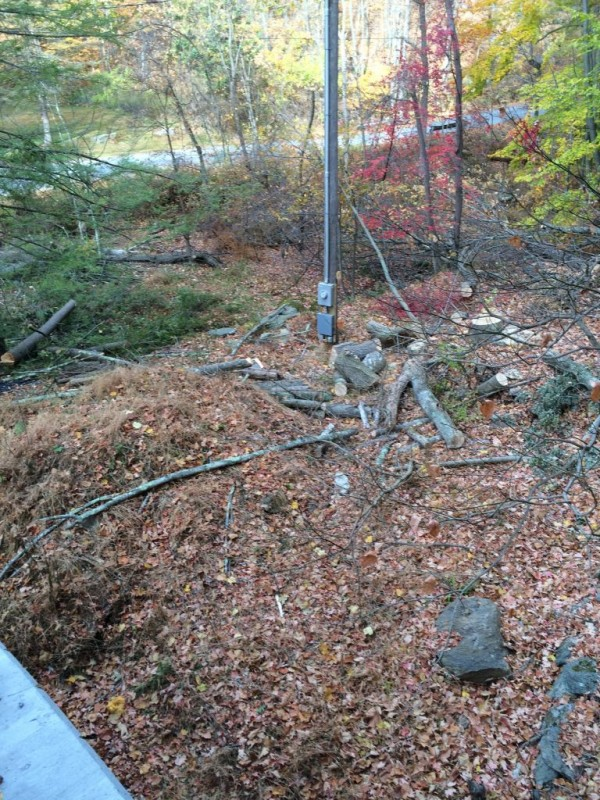 Trees cut down by the electric company.