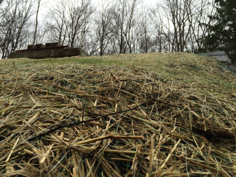 Grass beginning to grow on the roof.