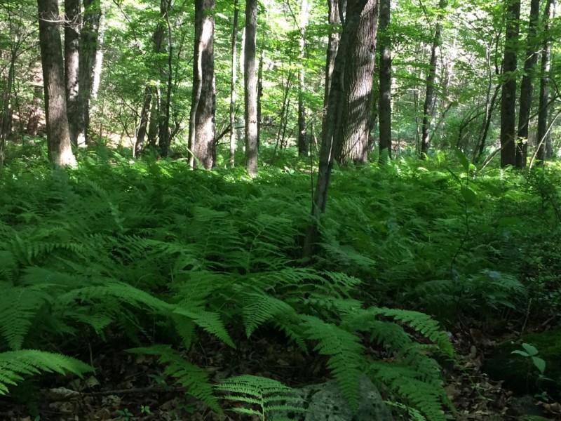 The woods of Lothlorien.