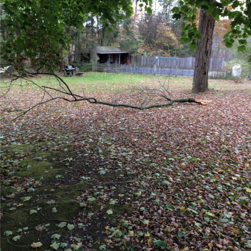 Tree branch in the backyard.